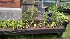Southwest School garden
